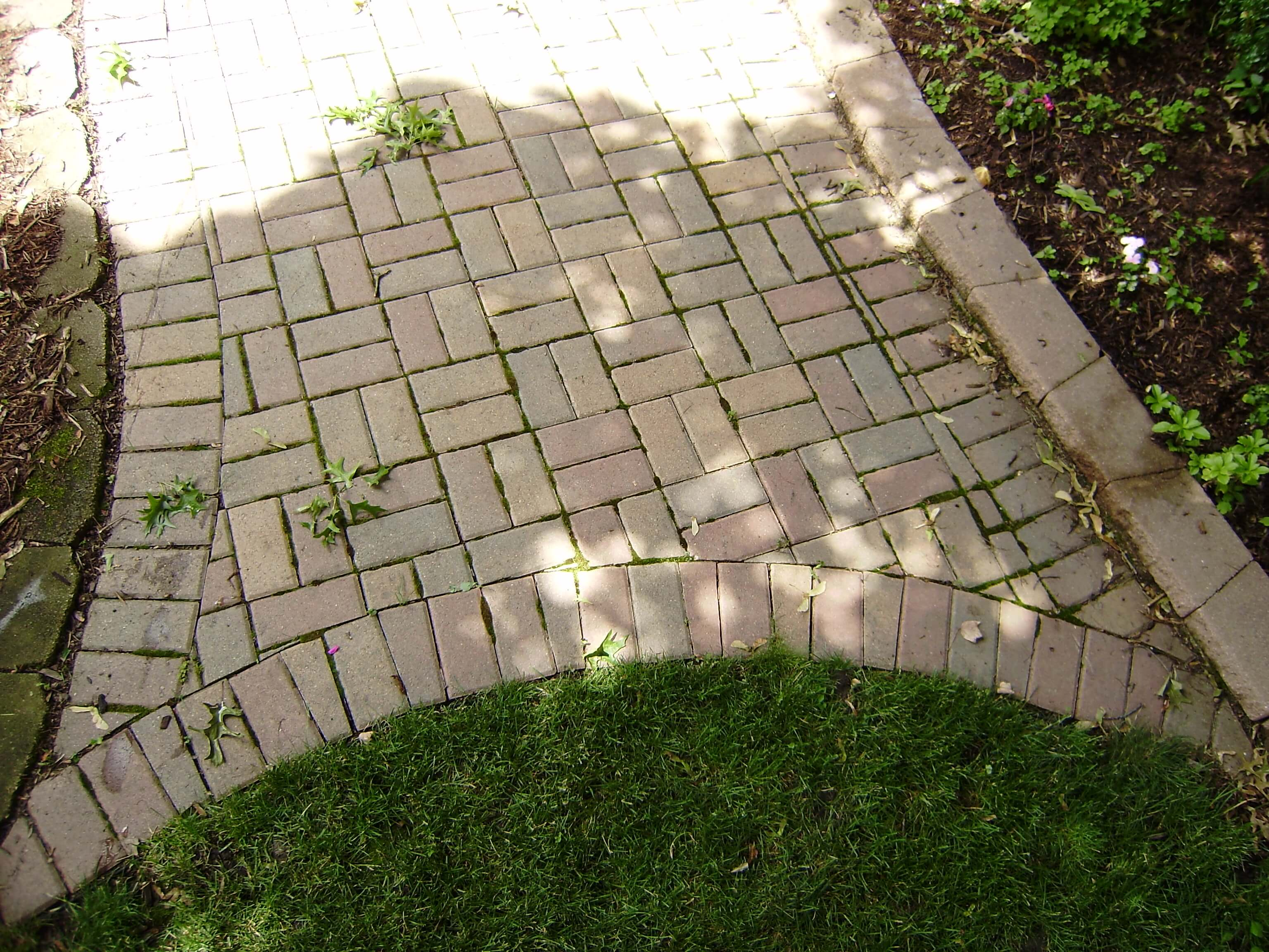 Paver patio walkway that is being taken over by moss algea and other debris